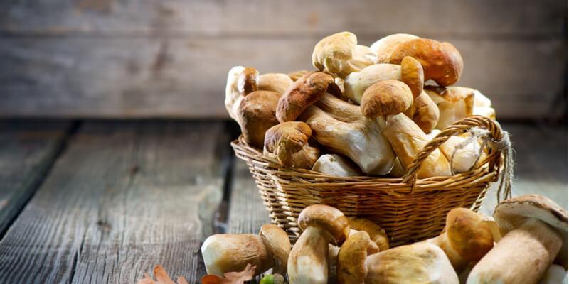 funghi freschi cesto