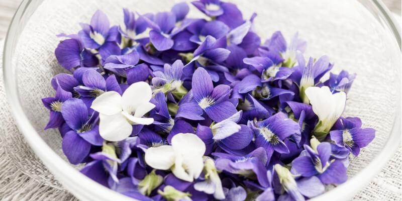 purple delight