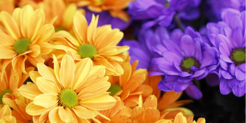 calendule fiori commestibili acquista online