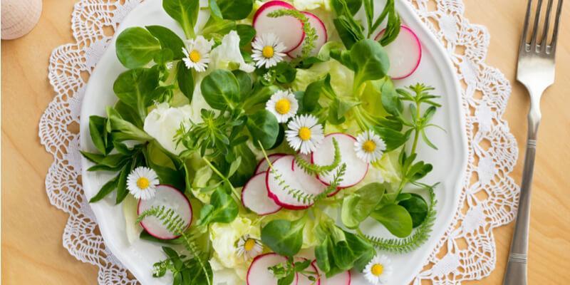 margherite fiori eduli acquista online su fruttaweb