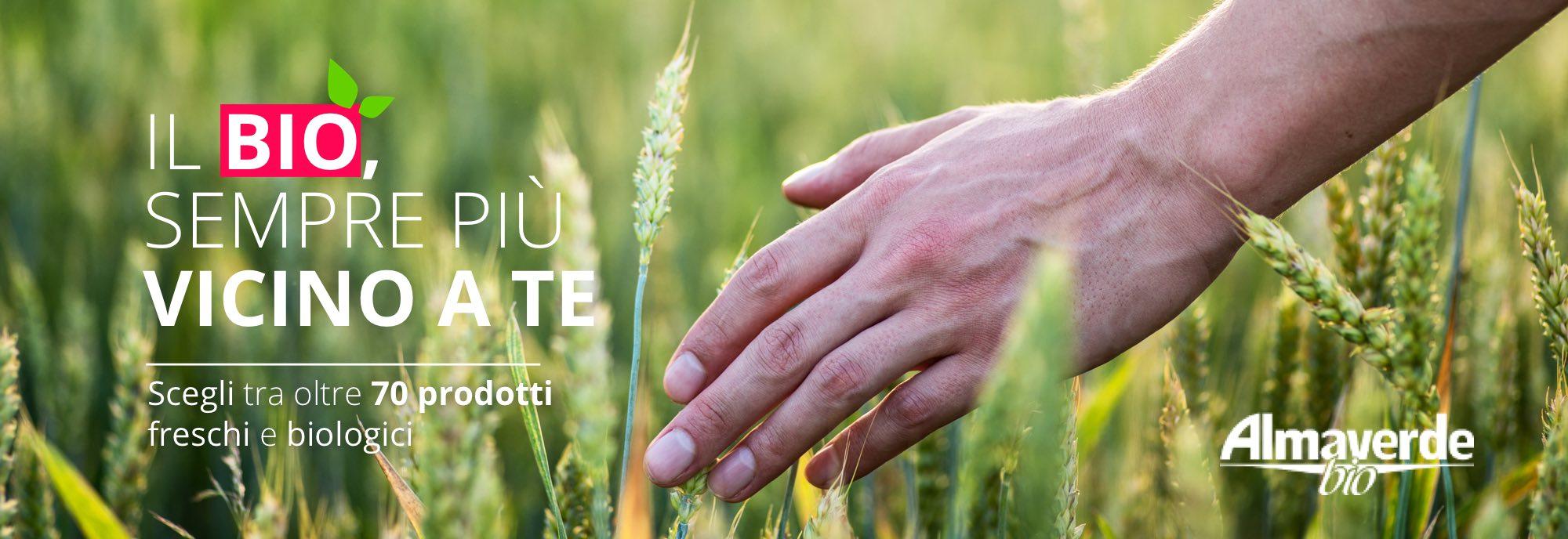 Acquista Online più di 70 varietà di frutta e verdura su FruttaWeb.com
