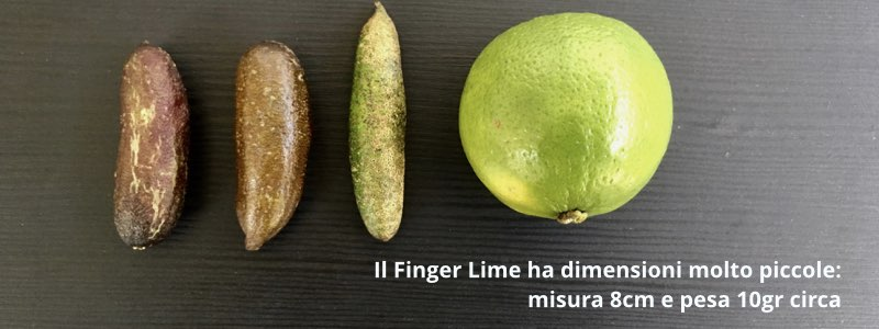 finger lime dimensioni acquista online fruttaweb