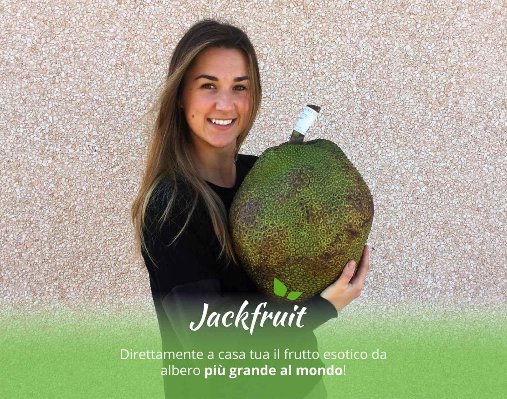 Acquista il Jackfruit (Giaca) con un Click su FruttaWeb.com. Consegna comodamente a casa tua