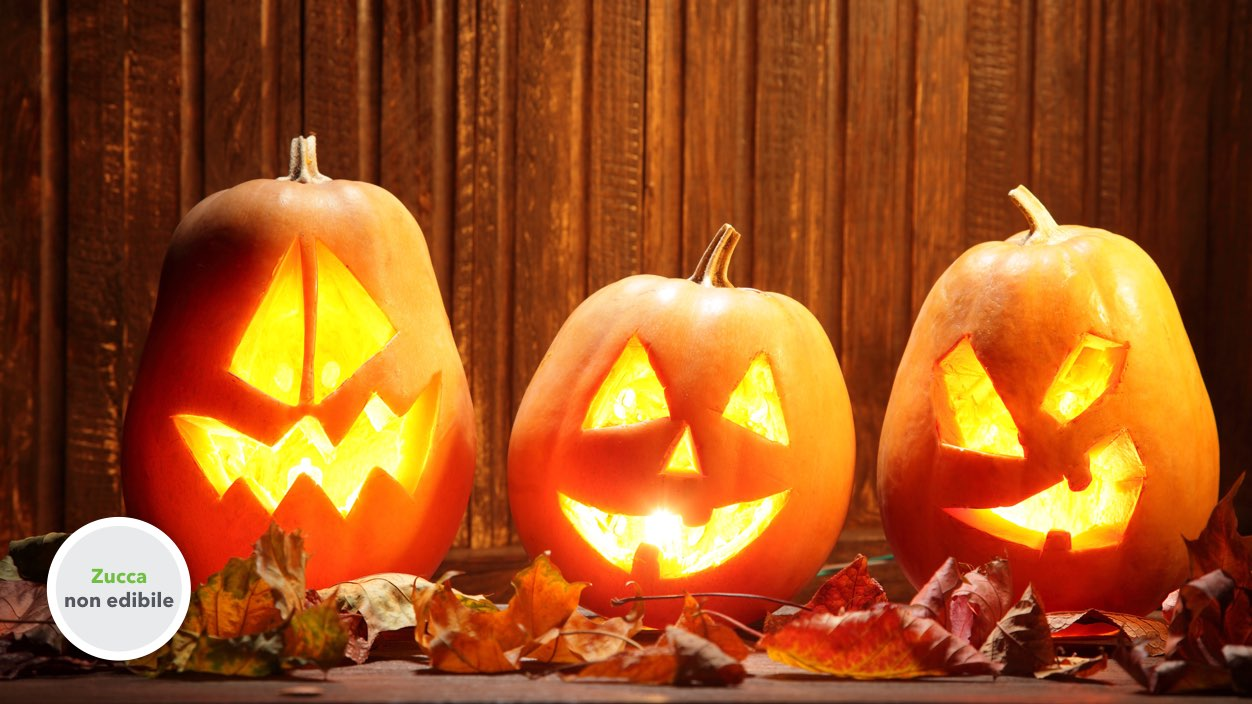 Zucca di halloween da intagliare vendita online for Foto zucche halloween