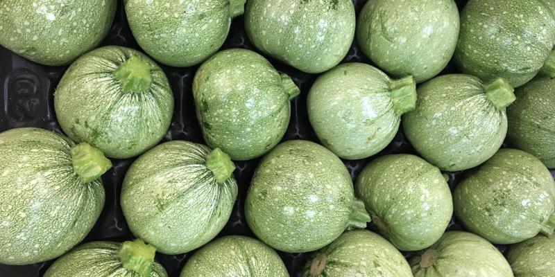 Zucchine chiare tonde acquista online for All origine arredi autentici