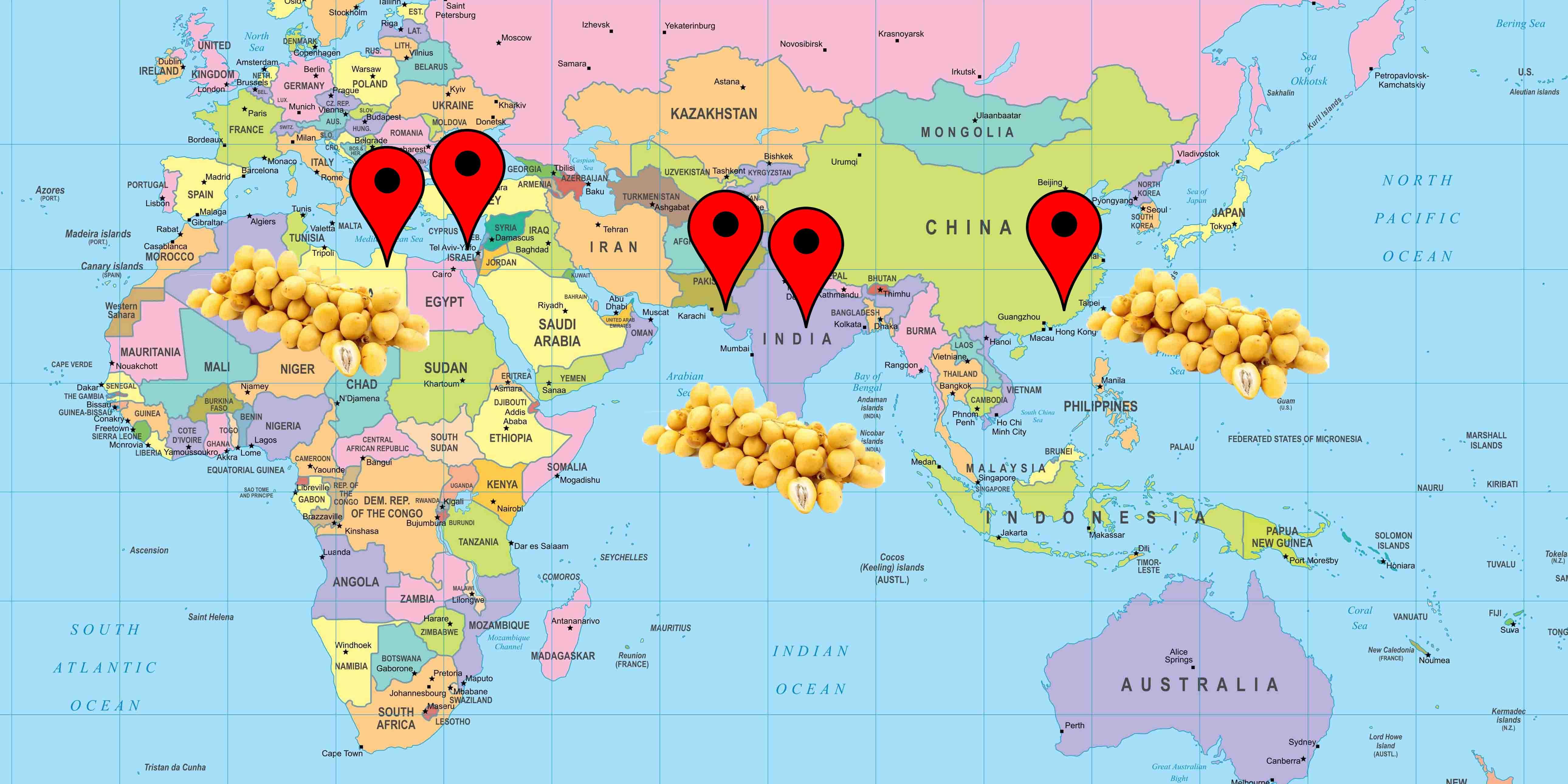 Cartina coltivazione datteri Barhi