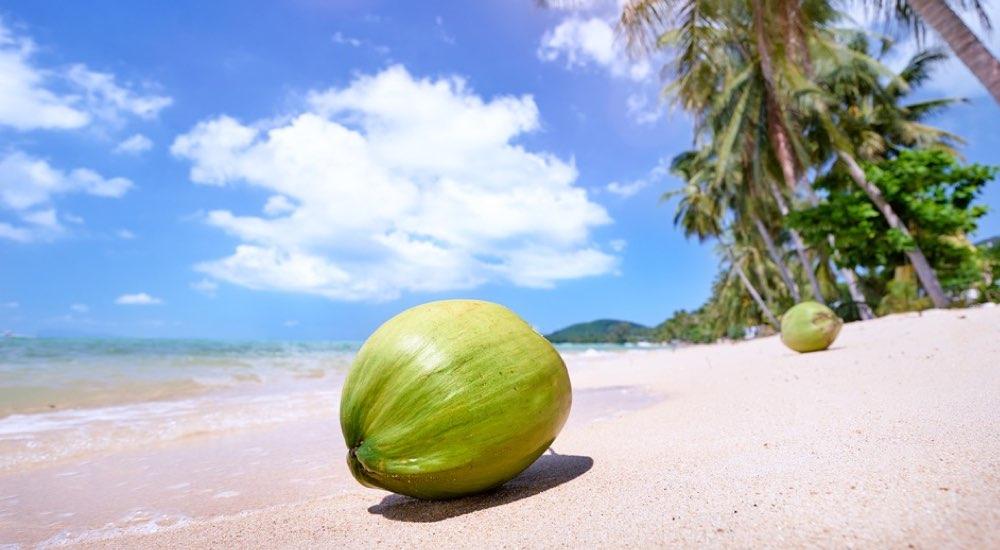Proprietà e benefici della purea di cocco