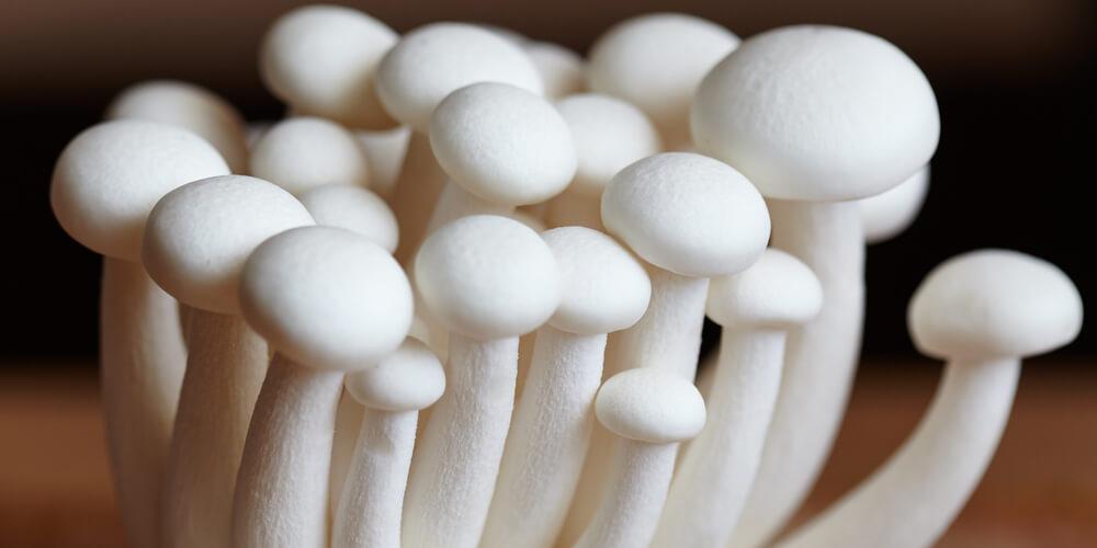 Funghi Shimeji bianchi freschi