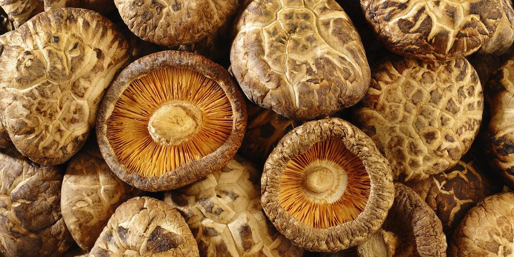 Funghi shiitake essiccati