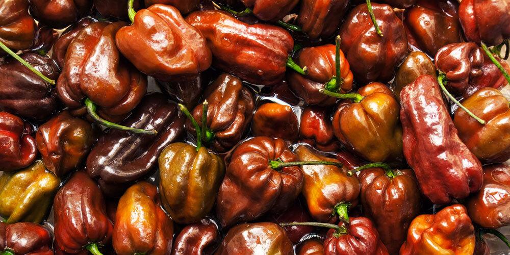 Peperoncini piccanti Habanero Chocolate compra ora su FruttaWeb