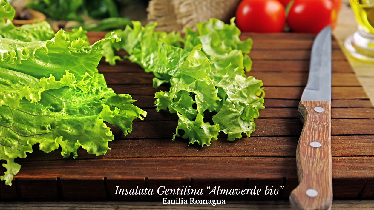 Ordina ora l'insalata gentilina almaverde bio su fruttaweb!