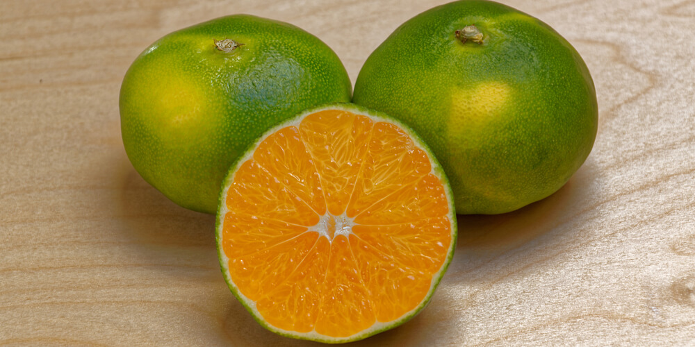 mandarino miyagawa bio