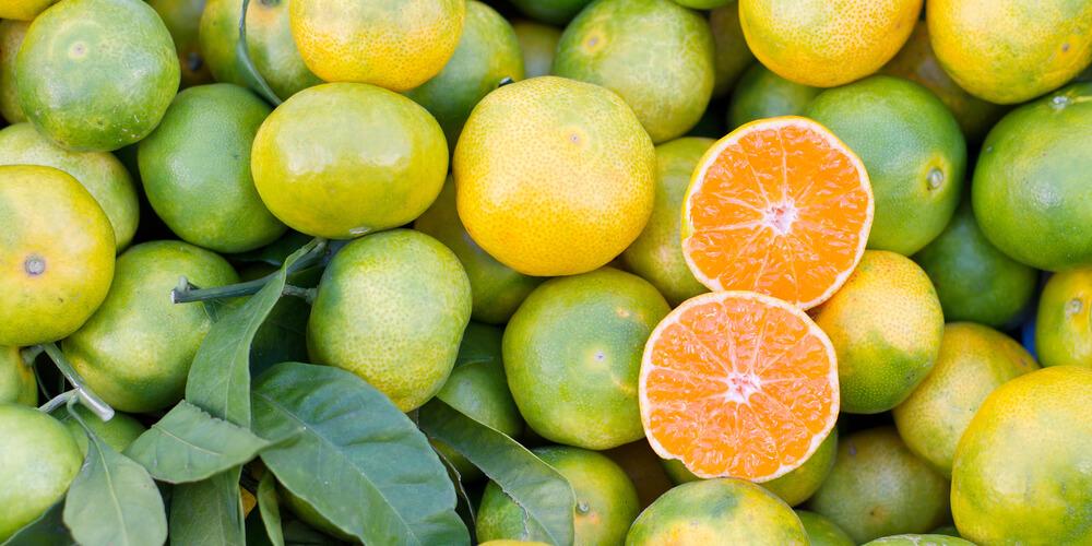 Mandarino satsuma miyagawa biologico
