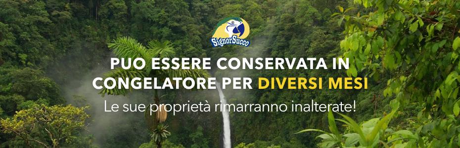 Purea cocco SignorSucco FruttaWeb Compra Online