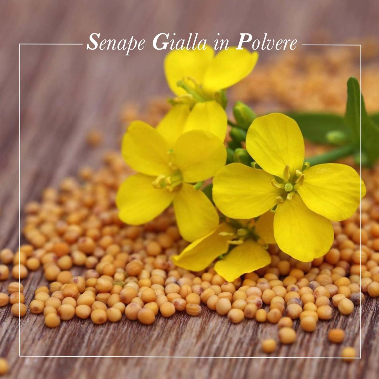 Senape gialla in grani, acquista online su FruttaWeb.com