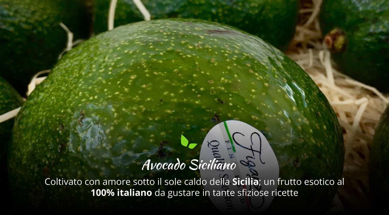 avocado-siciliano-caratteristiche