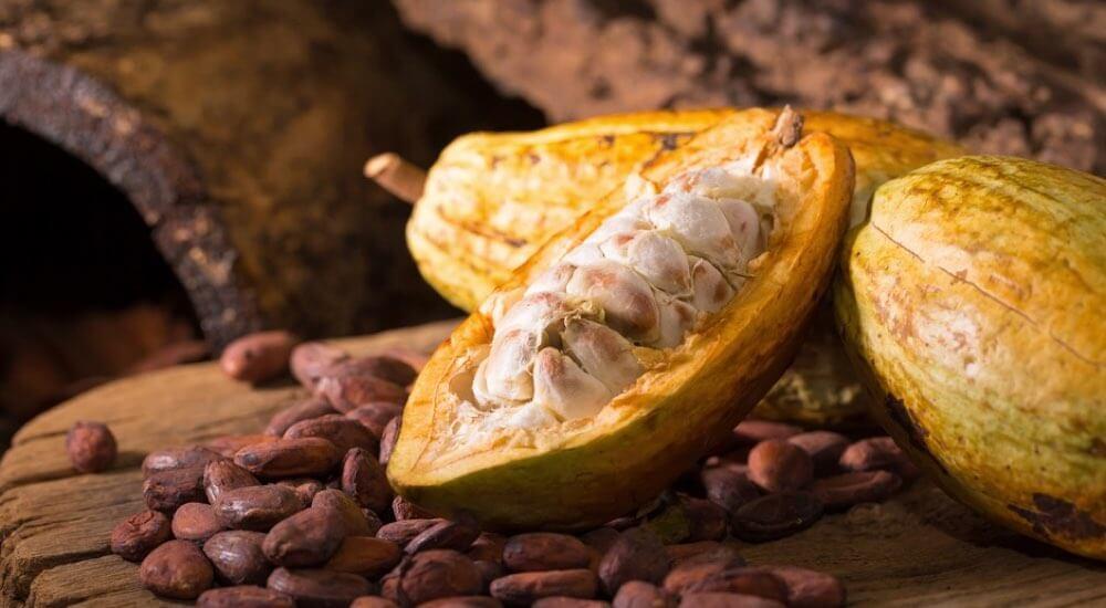 cacao-gusto-caratteristiche