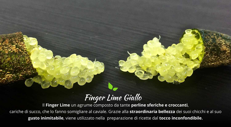 finger lime giallo fruttaweb