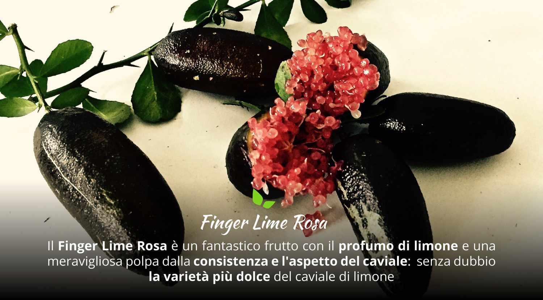 finger lime rosa acquista online fruttaweb.com