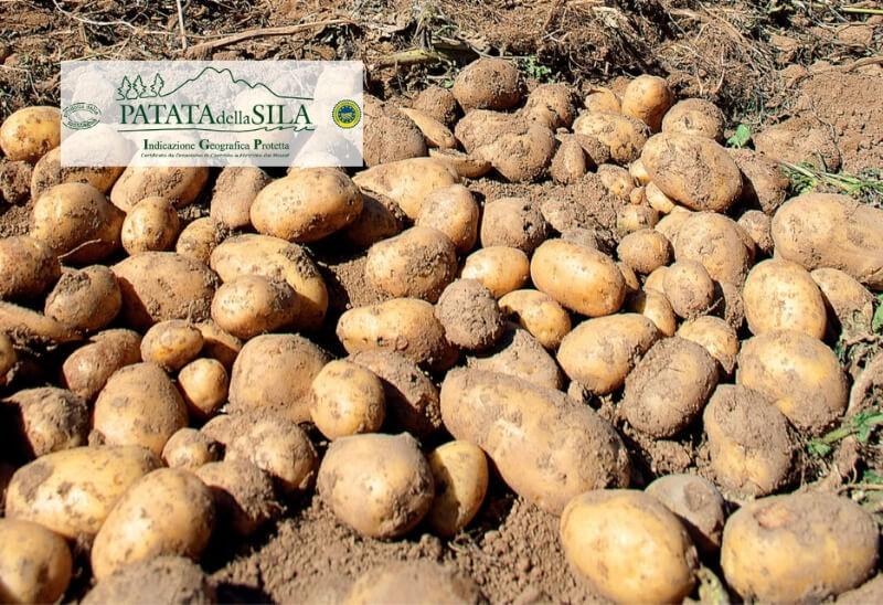 Consorzio Produttori Patate Associati